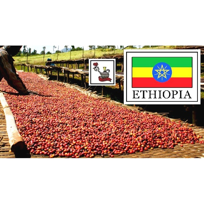 生豆 ◆ 衣索比亞 耶加雪菲 神燈 日曬 G1 ◆ 咖啡生豆