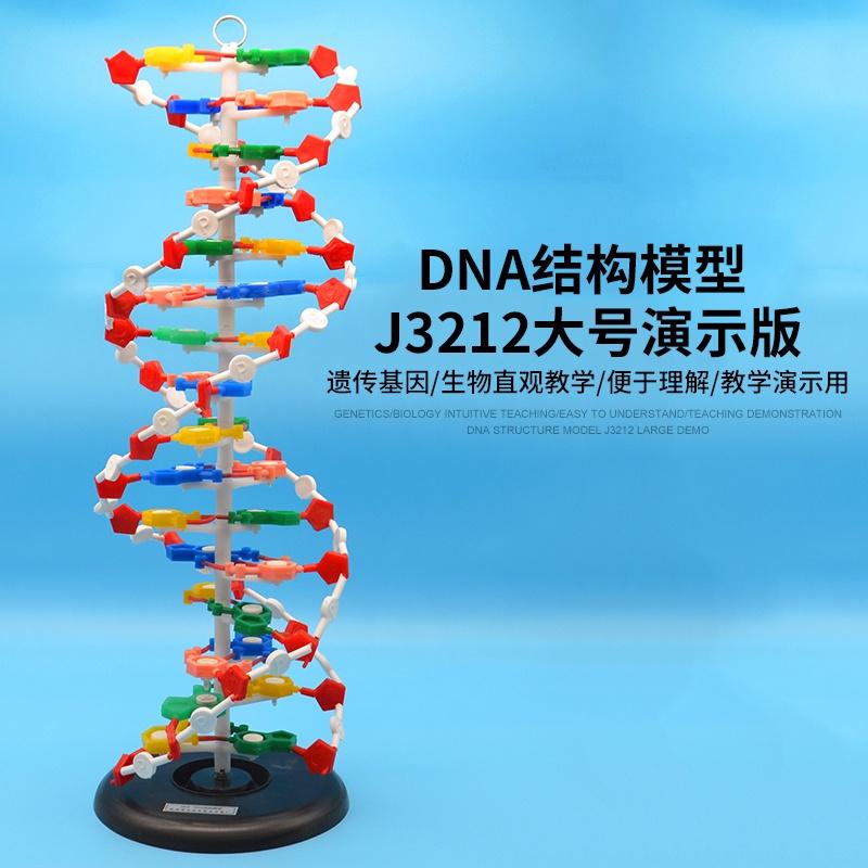 ⭐化學實驗⭐DNA結構模型/大號J33306雙螺旋60公分高中堿基對遺傳基因生物教學