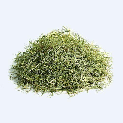 【含運】摩米MOMI特級一割提摩西牧草10kg(成兔、天竺鼠適合/可磨牙) 35%高纖維質初割牧草=白喵小舖=