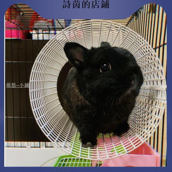 詩茵的店鋪寵物用品森度兔兔隧道龍貓兔子卷天竺鼠隧道 川井同款空中隧道圓形隧道萊品工廠