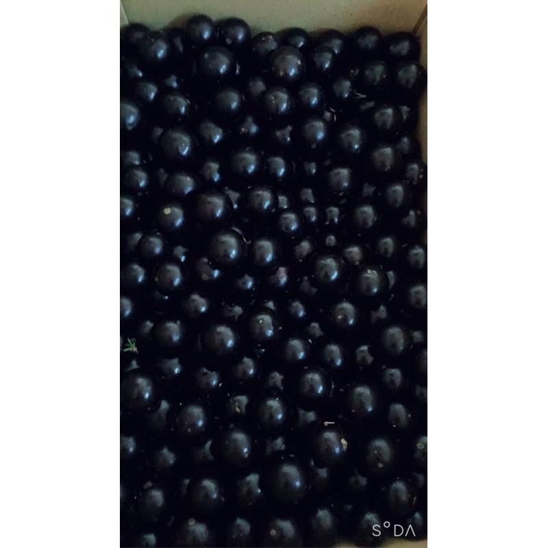 新鮮樹葡萄!現採即出 樹葡萄 嘉寶果鮮果果實可直接食用!1斤50元