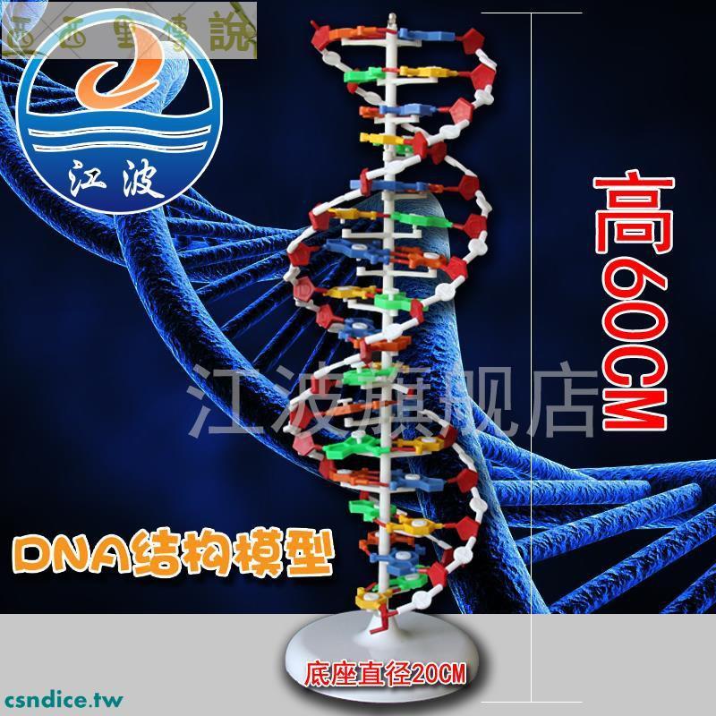 DNA雙螺旋結構模型大號J33306雙螺旋60cm高中堿基對遺傳基因生物教學/西西/西西