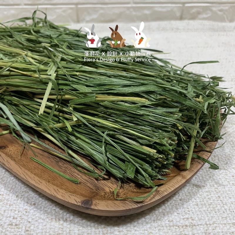 落羽花 x 香綠 黑麥草 25cm 草段 帶梗 兔兔 豬豬 天竺鼠 龍貓 烘乾牧草