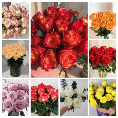 玫瑰花【種子】15粒10元玫瑰花 多款 玫瑰花種子