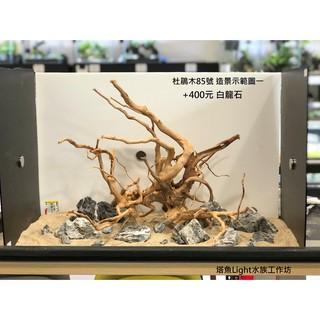 小缸(2尺)精選杜鵑木(黃金流木)85號 沉木 水族缸造景 主景 新竹縣