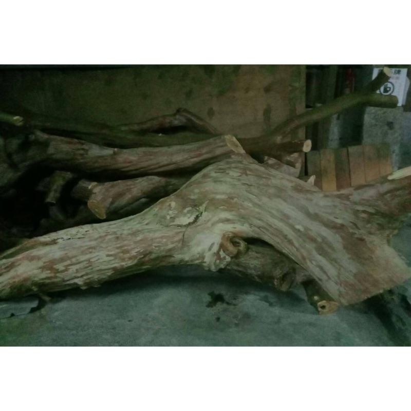 九芎樹、百年老樹、樹頭