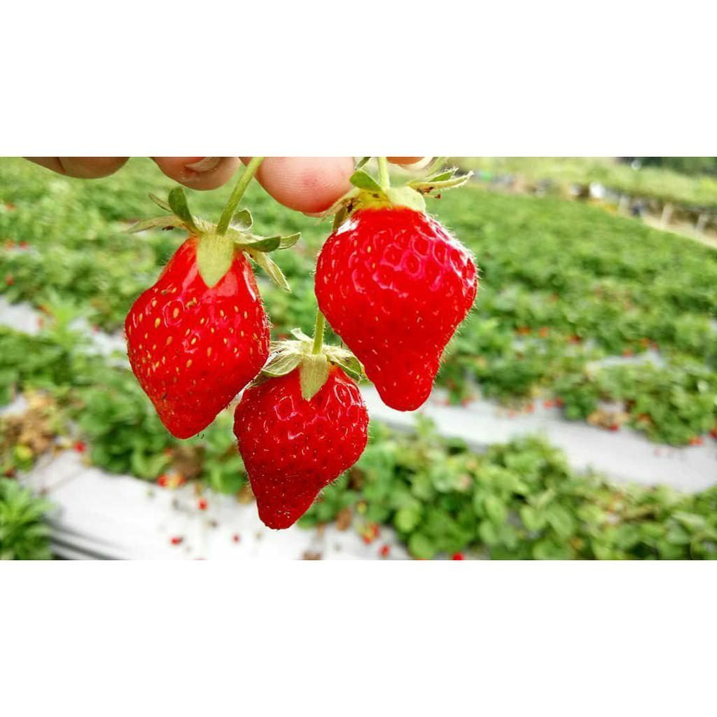 小農草莓醬 一瓶