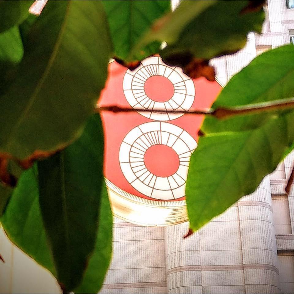 【BarDoor Coffee八豆咖啡】耶加雪菲  艾瑞嘉水洗G1 / 淺焙