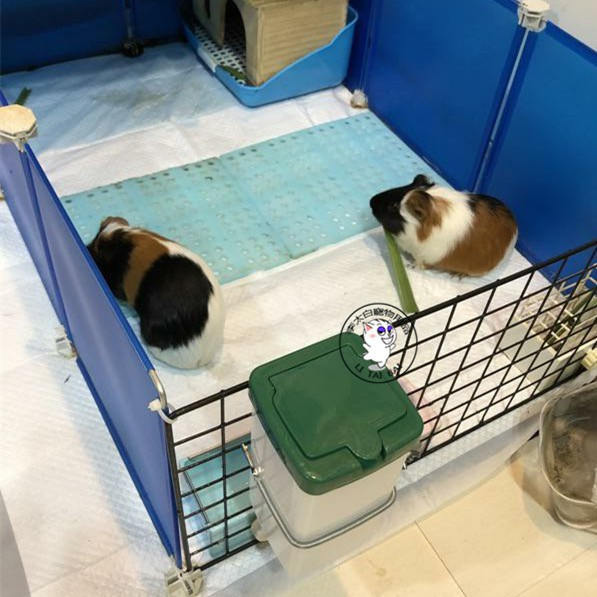 ◊▫天竺鼠 豚鼠 飲水水壺 兔子飲水水壺  小寵水壺 松鼠 龍貓 撞針水壺 飲水器