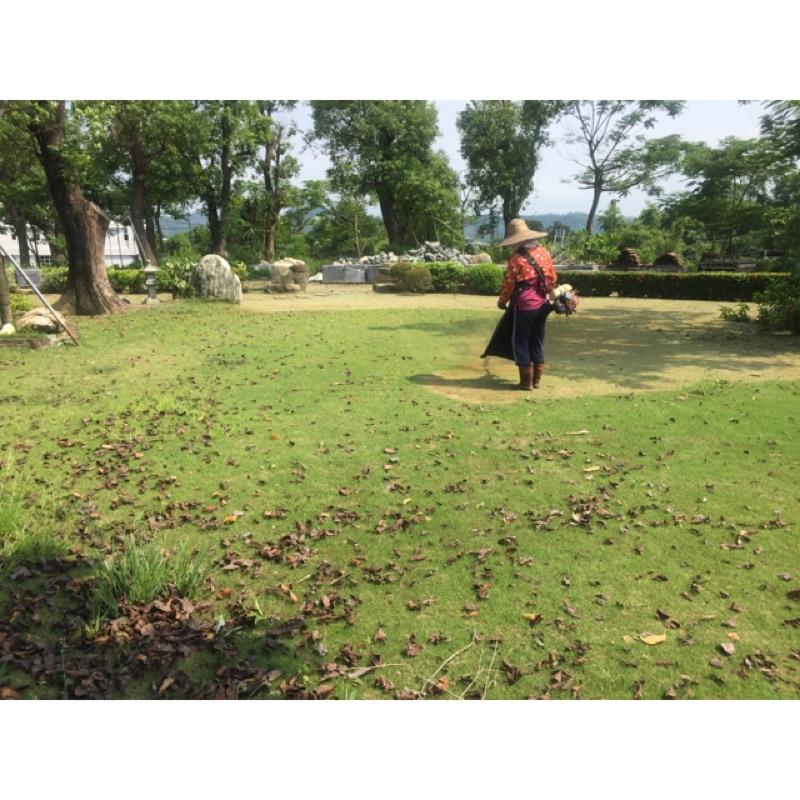 整理家園.庭院整理.除草.代客除草.種植灌木喬木.修剪整地.鋪草