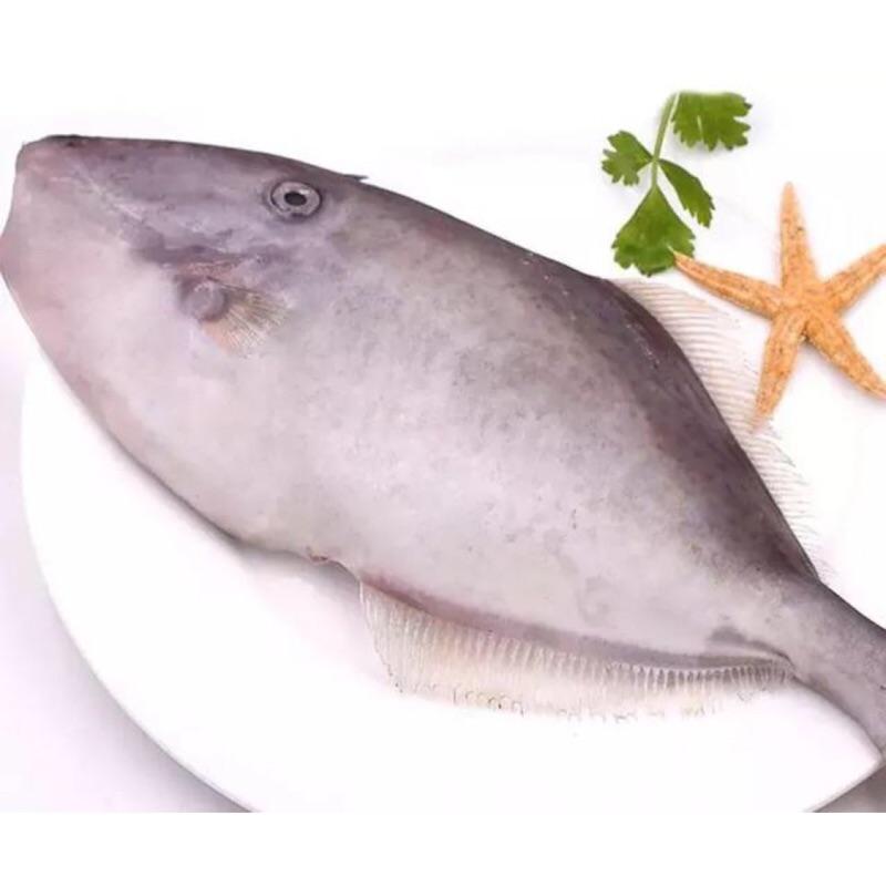 新鮮海產~海捕剝皮魚