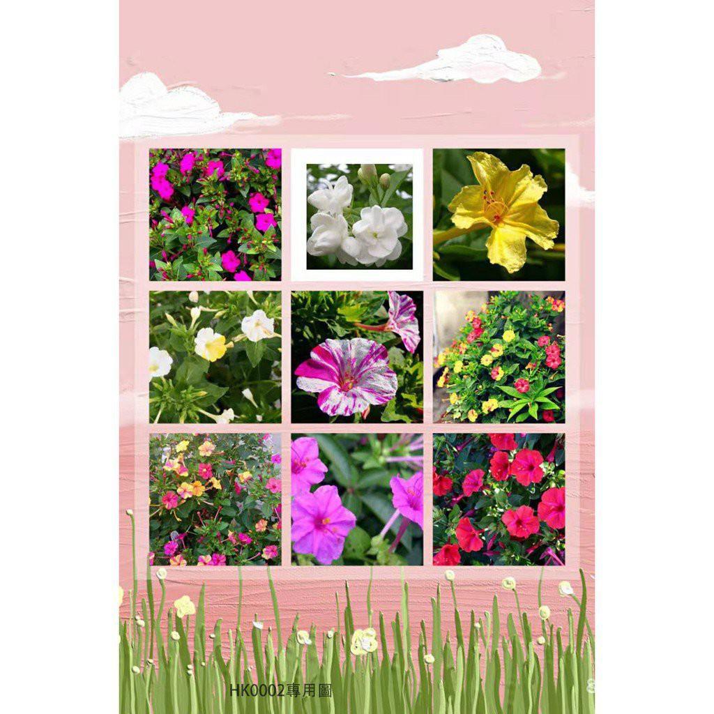 全網最多款茉莉花種子 茉莉花種籽 花卉種子 花海種子四季種子