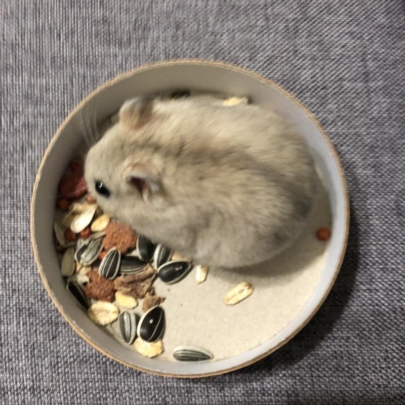 倉鼠飼料倉🐹綜合五穀雜糧口味