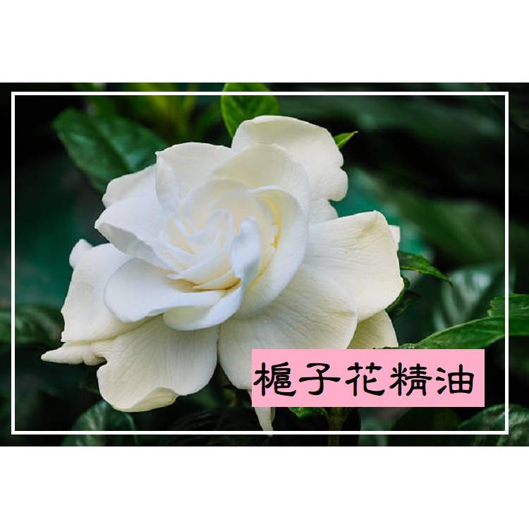 【露西皂材】水溶性梔子花精油 (Gardnia flower essential oil) 槴子花精油