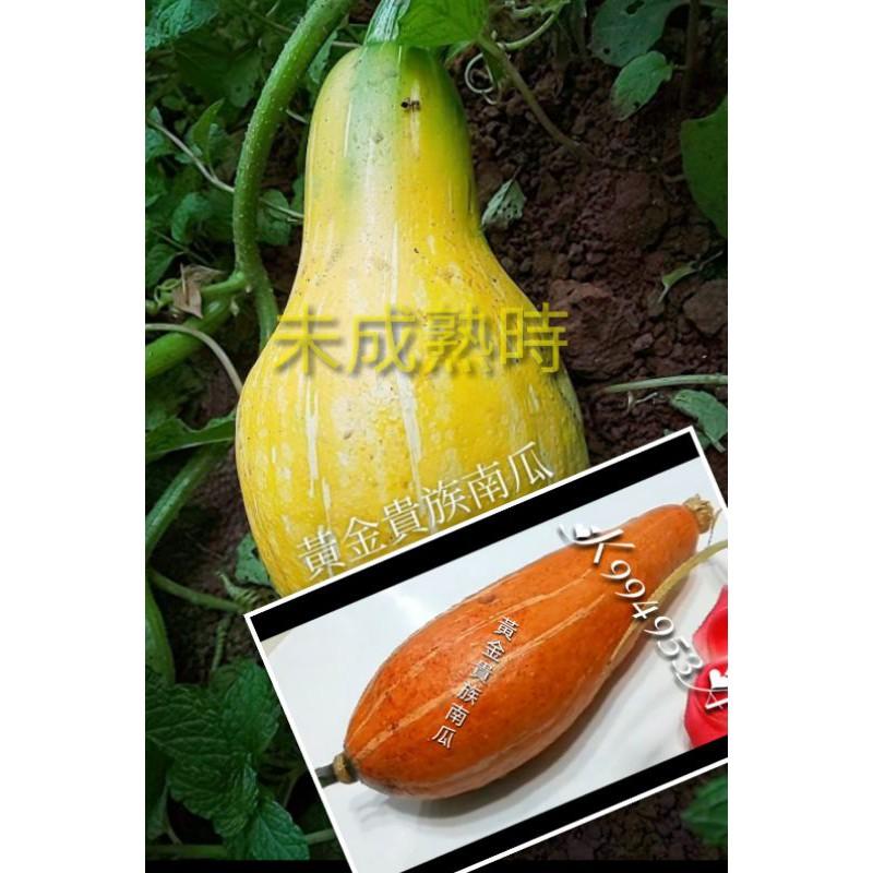 黃金貴族南瓜種子3粒$110