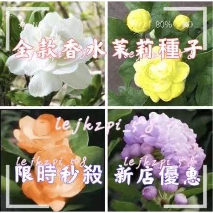 香水茉莉花種子 驅蚊蟲 茉莉花種子籽 茉莉種子,現貨秒發