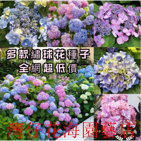 繡球花種子 繡球花種籽 發芽率99% 超低價 限時搶購