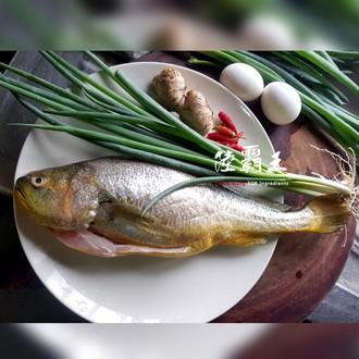 【陸霸王】大黃魚 新鮮黃魚 去鱗去肚去鰓 全新生活 優質蛋白質640G±10% $350起