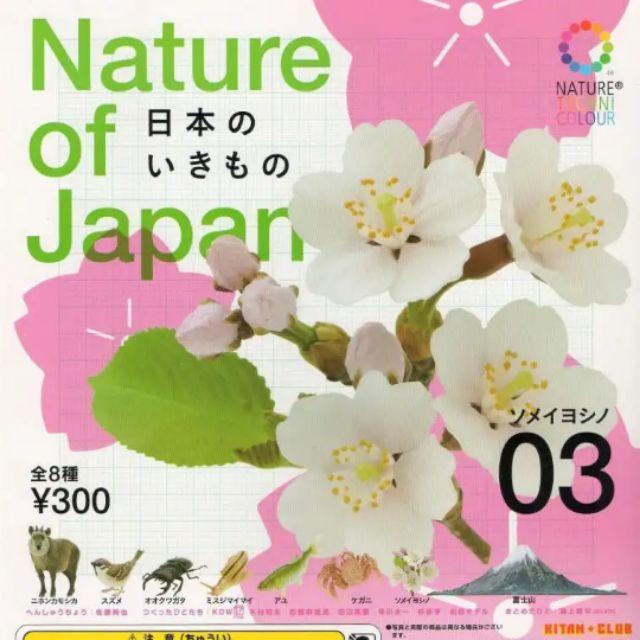 奇譚NTC 擬真扭蛋 Nature of Japan 日本自然生命3扭蛋 日本髭羚 麻雀 富士山 櫻花 香魚 蝸牛 毛蟹