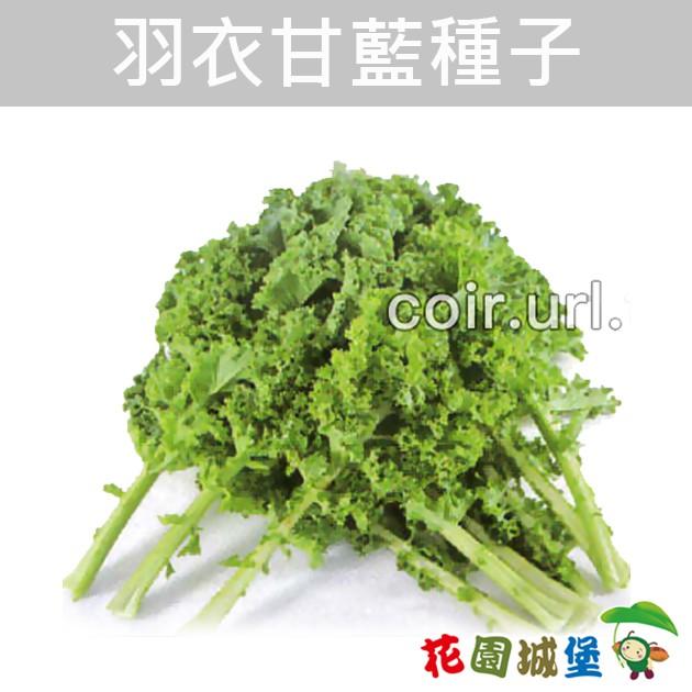 現貨-羽衣甘藍種子 Kale【花園城堡】