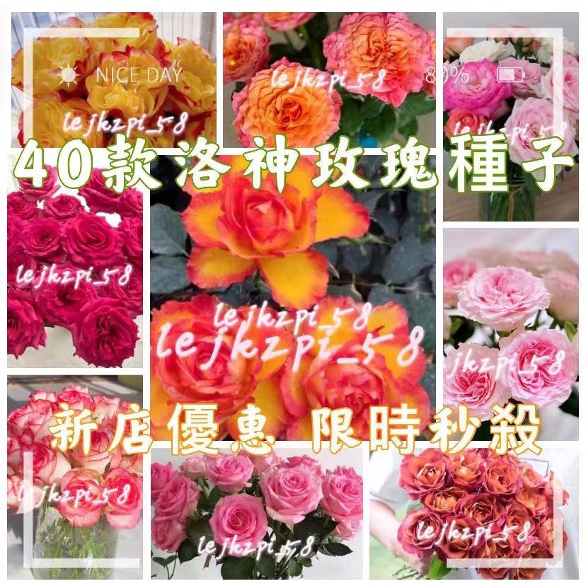 40種玫瑰花種子 海洋之歌、戴安娜、紫玫瑰、香檳玫瑰、橙紅玫瑰、流星雨 洛神玫瑰種子