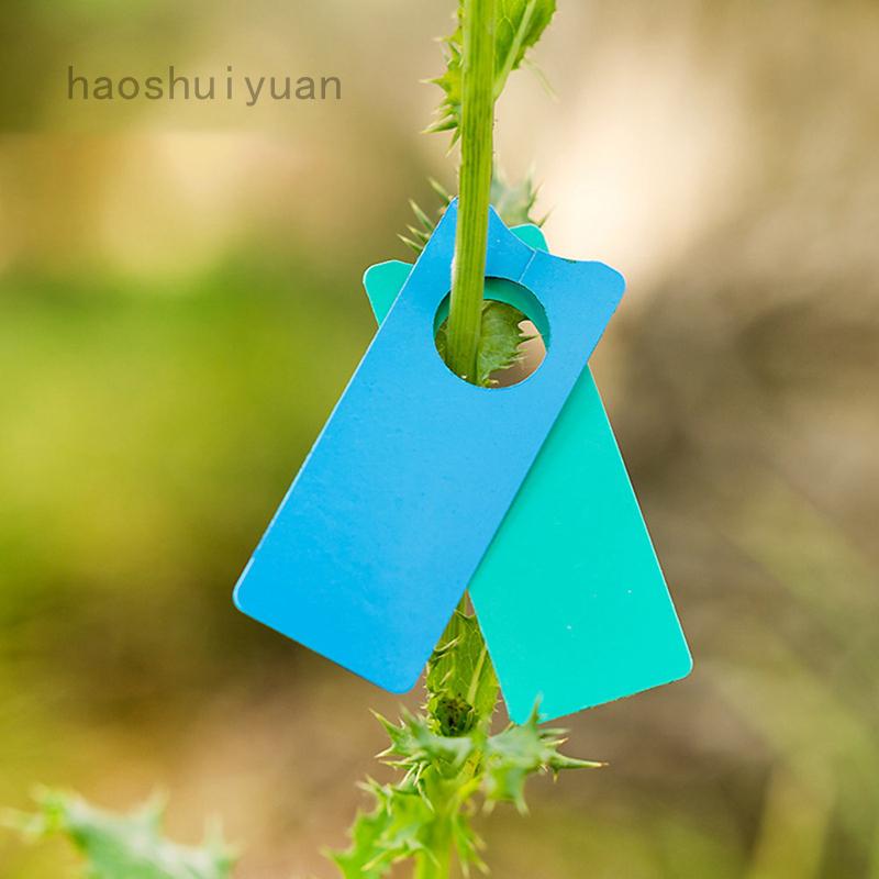 haoshuiyuan植物標籤葡萄果實標籤加厚塑料植物樹標籤多肉