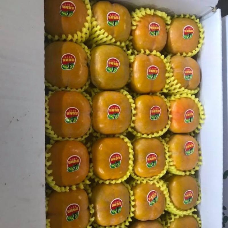 台灣高山甜柿「產季結束」