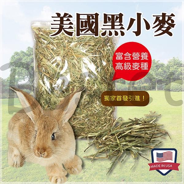 美國黑小麥 高級麥種 兔子牧草 兔子主食 天竺鼠 龍貓 牧草 天然 無篩