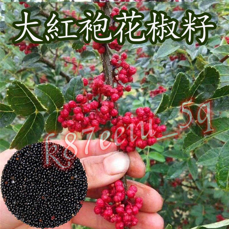花椒 (種子) 藤椒 (種子) 大紅袍 大紅袍花椒 (種子) 蔬果類 (種子)