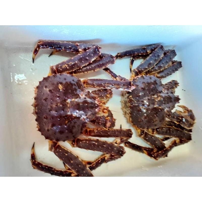 [真響亮]活體帝王蟹4.5斤