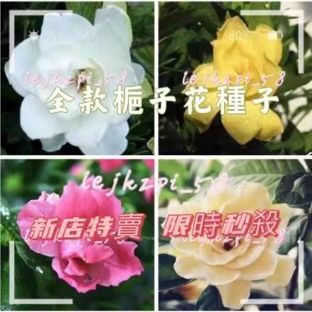 梔子花種子 花香郁濃 易種易活 四季開花
