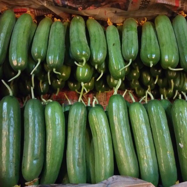 『蔬菜種子』水果小黃瓜