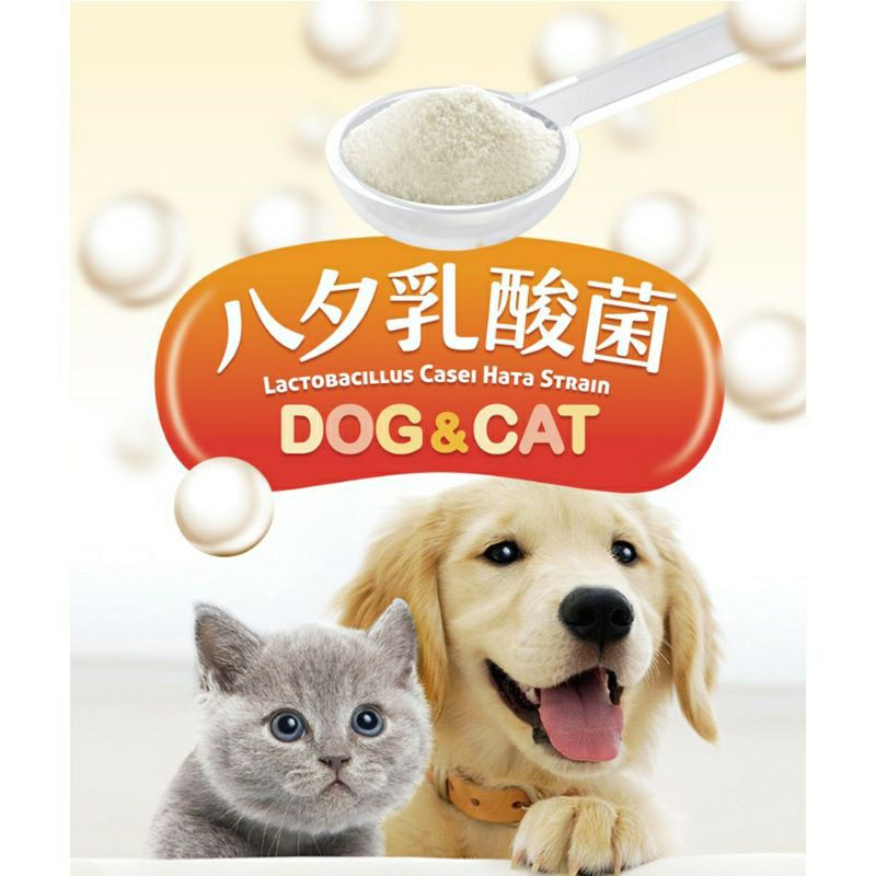 LCH寵物乳酸菌【袋裝10g】_益生菌