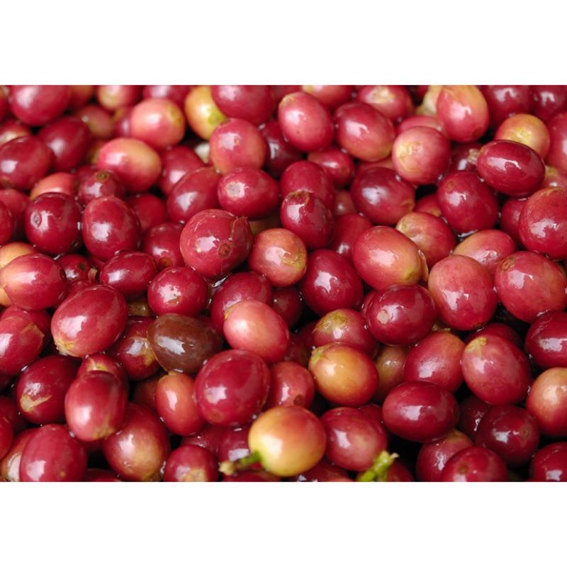 ☘田氏啡魔力☘草莓🍓🇪🇹衣索比亞 耶加雪菲G1 沃卡 科契爾鎮 水洗