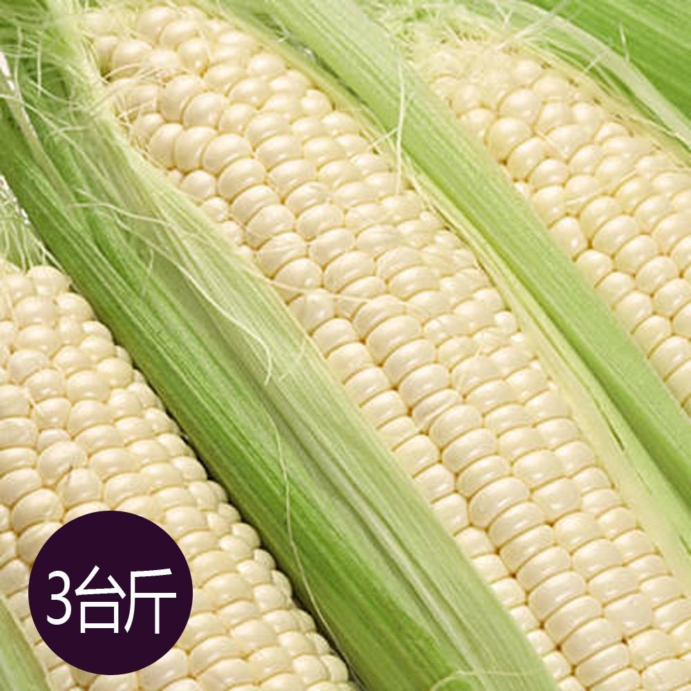 【鮮採家】糯米玉米3台斤1箱(約6-10支)