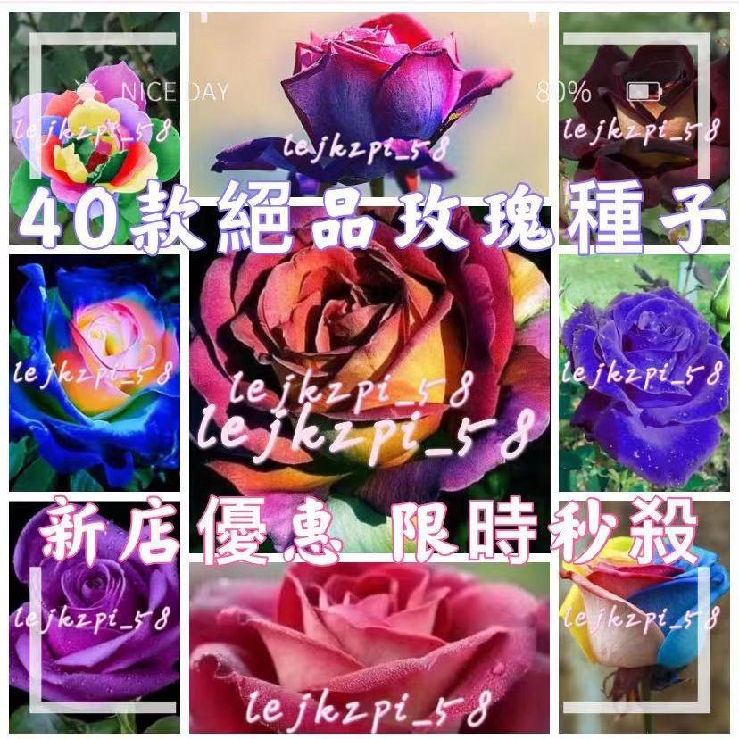 多款稀有玫瑰種子 七彩玫瑰花種子 多色玫瑰花種子 玫瑰花種子 園藝花卉種子,現貨秒發