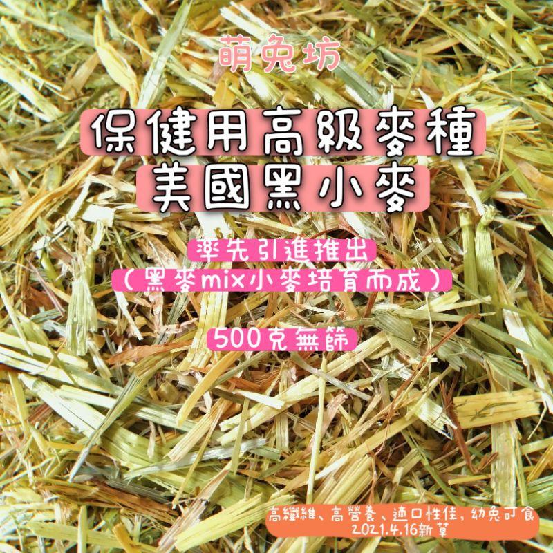萌兔坊 黑小麥 美國黑小麥 保健用高級麥種 兔子牧草 天竺鼠牧草 牧草 龍貓牧草