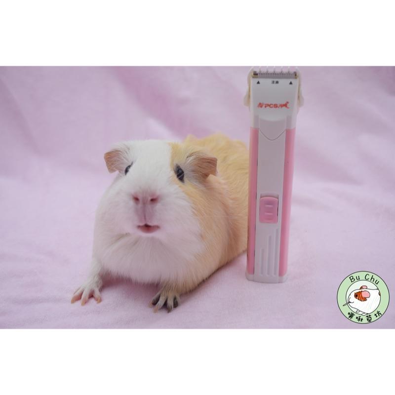噗啾草坊🐹 現貨 專業寵物電剪 剃刀 小粉紅 推薦必備 天竺鼠 兔子 蜜袋鼯 修整局部適用