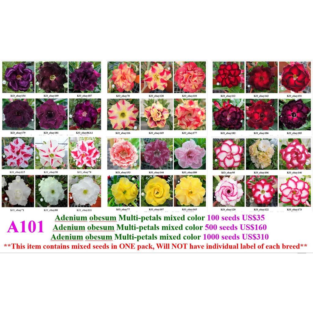 沙漠玫瑰 種子 seeds ㊣ adenium_ko_tw ㊣重瓣沙漠玫瑰種子★綜合品種★一包15粒 特價100元