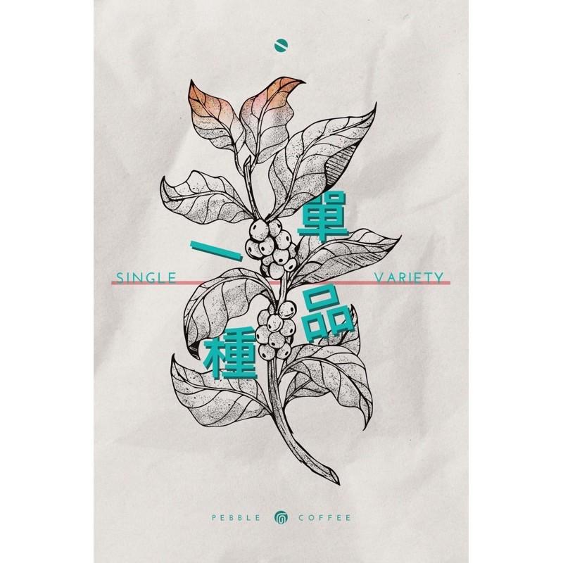 衣索比亞 水洗/日曬 西達摩 單一品種74110 G1 20/04批次 淺焙 《老鷹咖啡》非洲冠軍品種