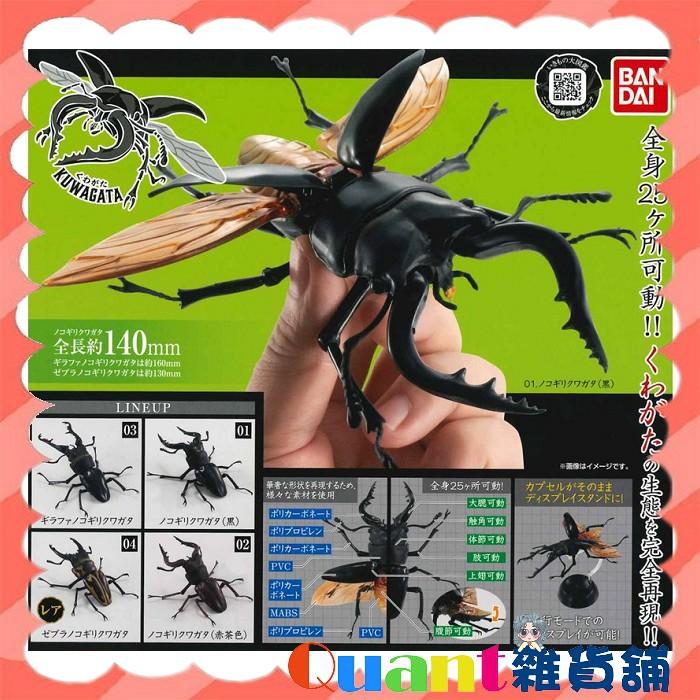 ∮Quant雜貨舖∮┌日本扭蛋┐ 萬代 BANDAI 鍬形蟲環保扭蛋 單售款 鍬形蟲 現貨 扭蛋