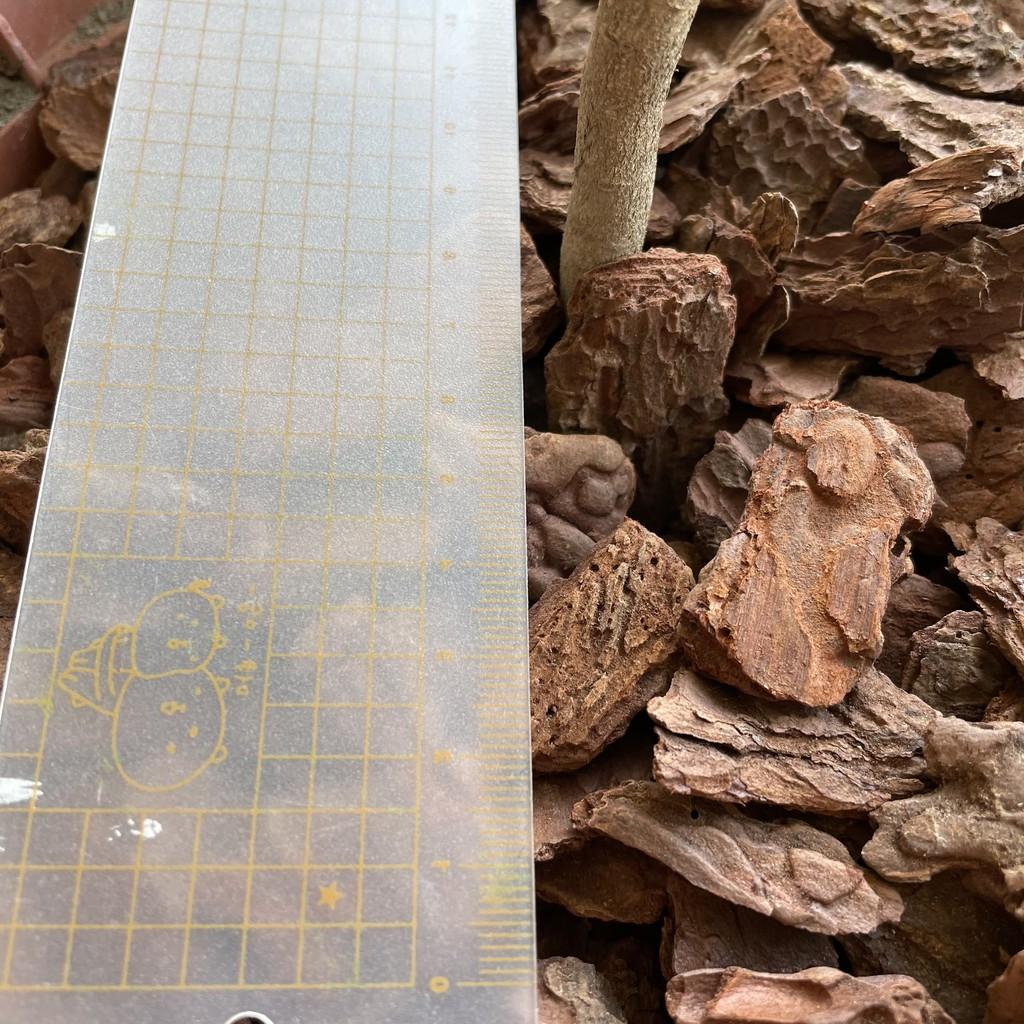 [只會多不會少] 進口樹皮 250g/ 400g蘭花 蝴蝶蘭 鹿角蕨 爬蟲 松木 介質