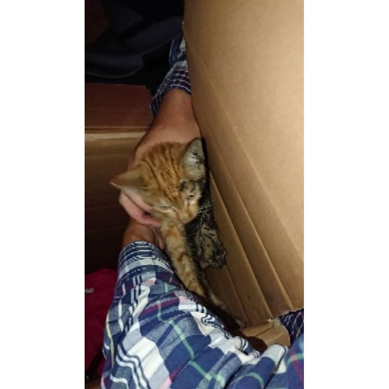 1100g 好市多 costco 分售 科克蘭 紫包 鋁箔夾鏈袋 分裝包 貓飼料 浪貓