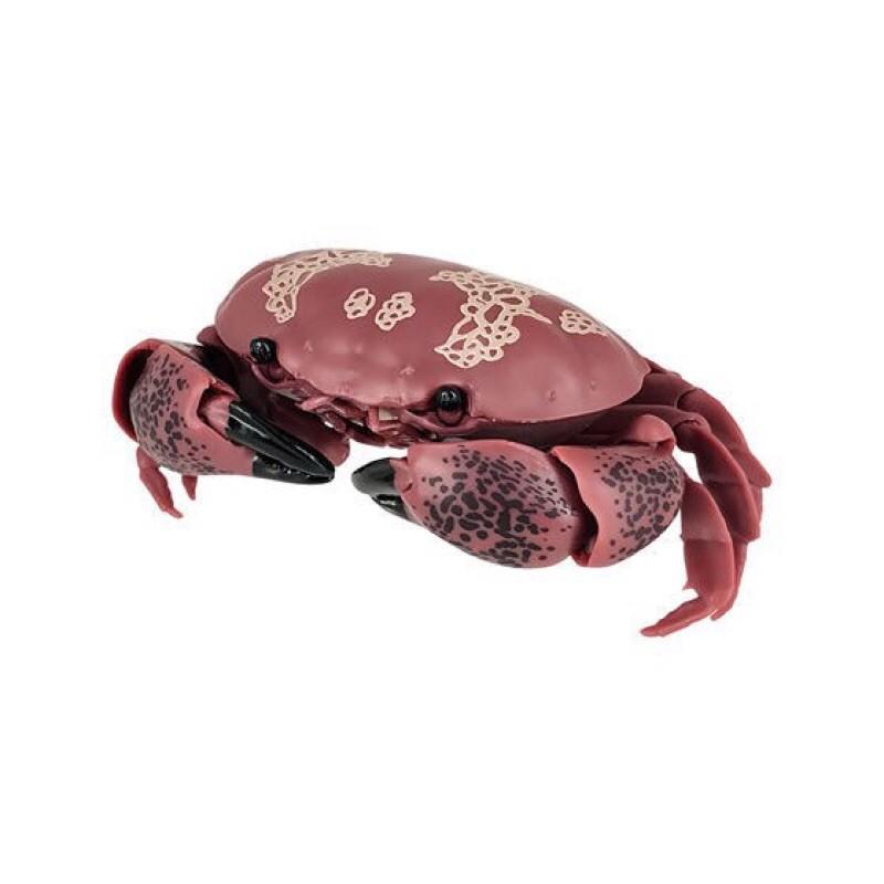 單賣 現貨(鋸緣青蟹 饅頭蟹 )BANDAI 萬代 生物大圖鑑 環保扭蛋 螃蟹 140mm 可動 花紋愛潔蟹 整套4款