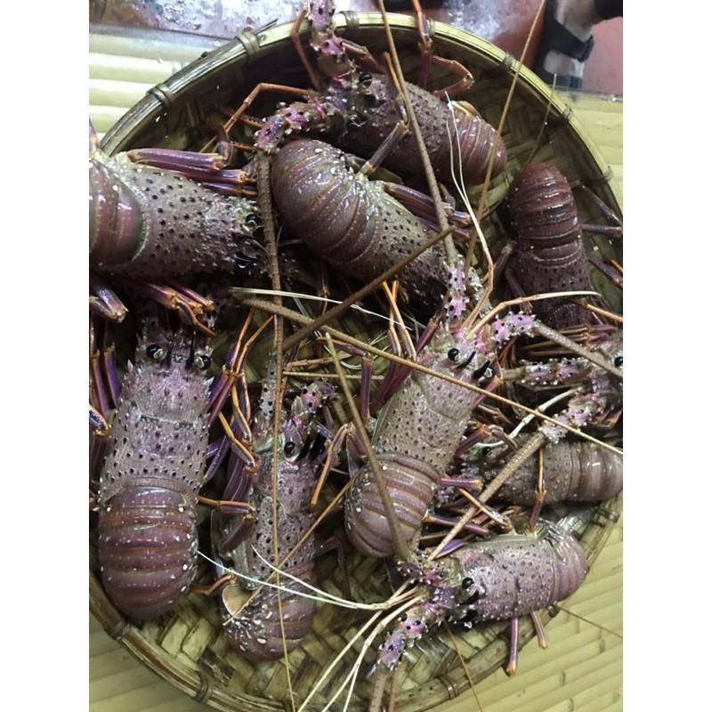 「一誠水產」全年最低價西澳水姑娘龍蝦
