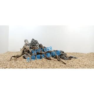 客制化造景-酸洗龍延石+龍延木2尺標缸