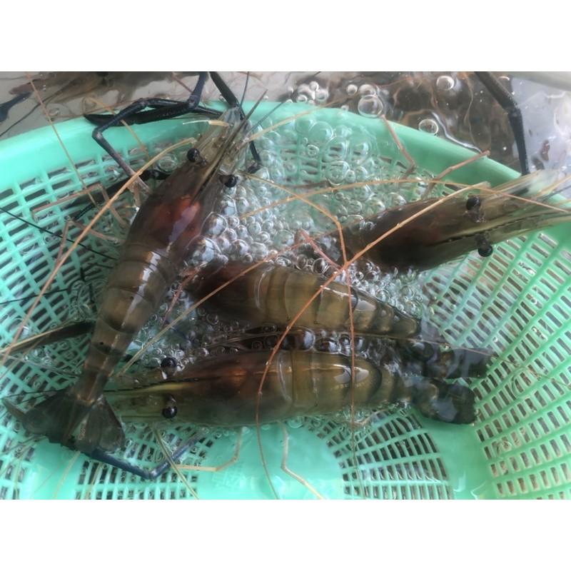 活跳跳泰國蝦、紅頭蝦約8-13隻一斤(這邊是8斤免運下標區),🤣這幾天超多蝦