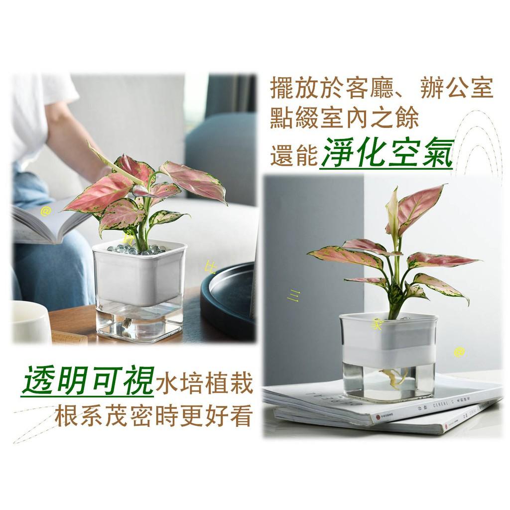 耕 花 水 栽培