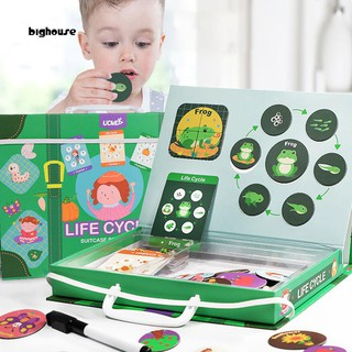 BIG_Magnetic Lifecycle Frog Animal Puzzles鋼筆繪畫板孩子教具玩具