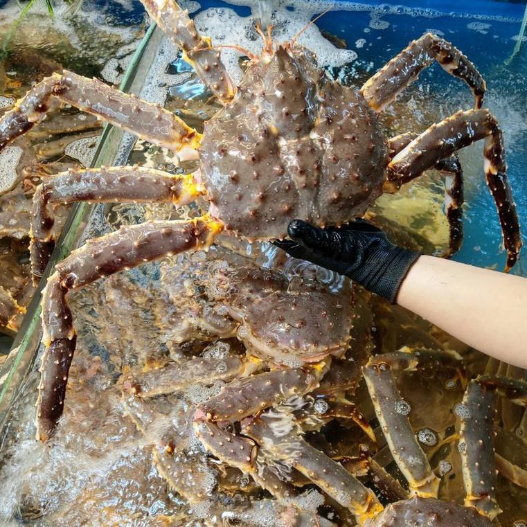 東華水產 生猛 活體 帝王蟹 鱈場蟹 極速24h出貨 清蒸、熬湯、焗烤、火鍋